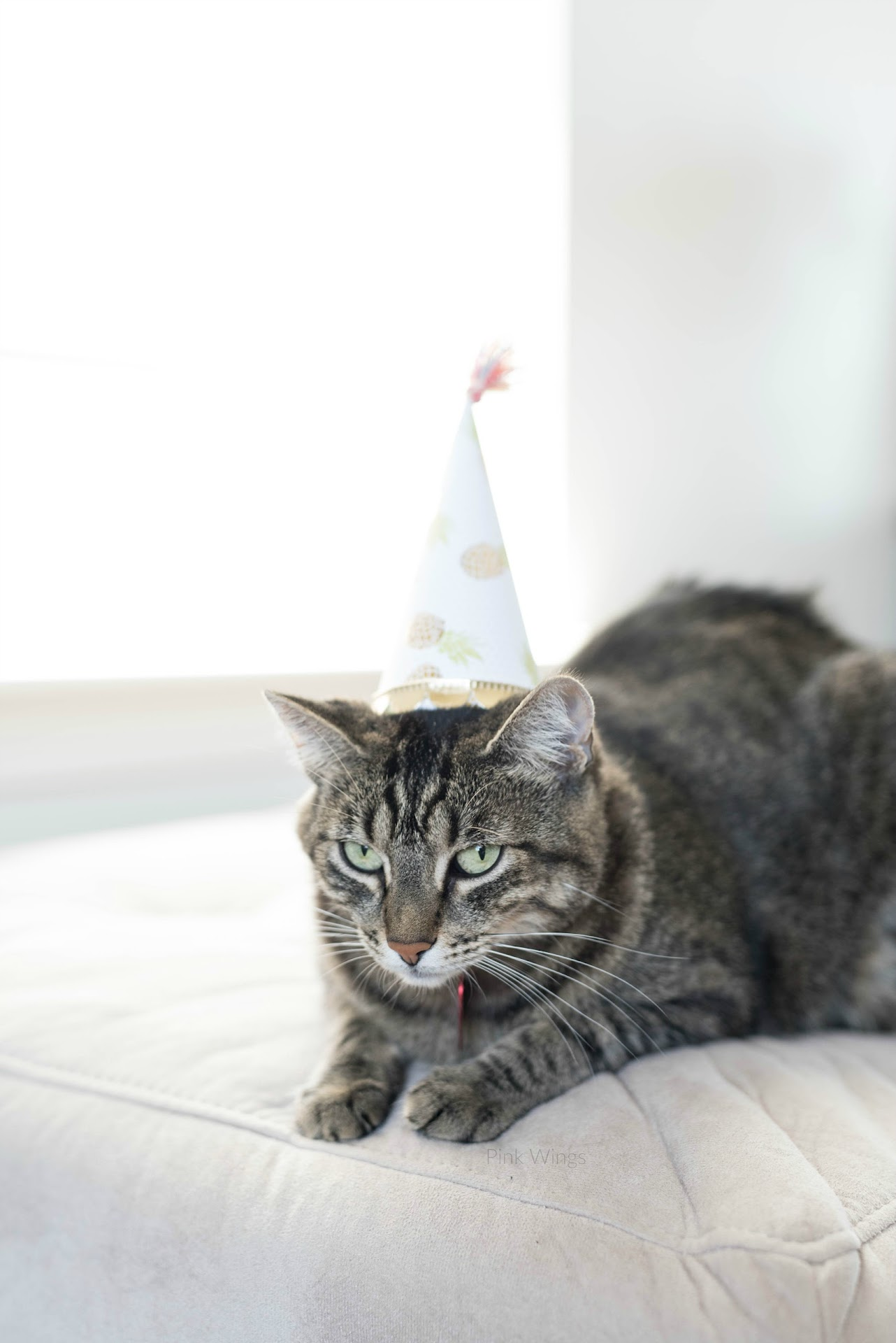 Tabbyy Cat Birthday Diy Hats How To Make A Hat