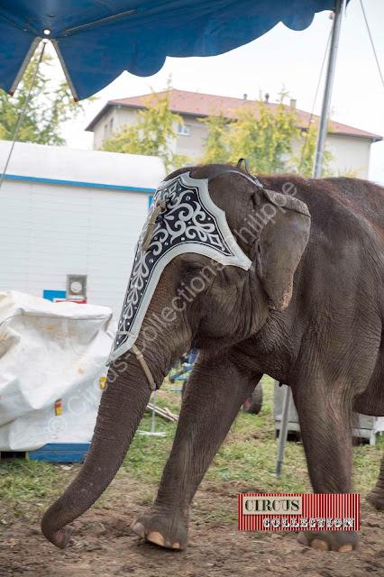éléphant du Cirque Knie