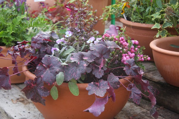 How to Plant Containers for Autumn and Winter Interest