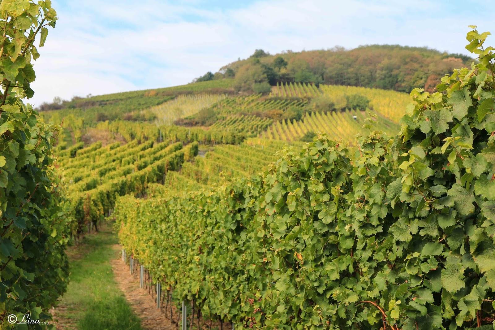 Le jardin de leina sur les routes des vins d 39 alsace - Les jardins d alsace ...