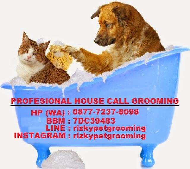 Profesional House Call Salon And Grooming Grooming Anjing