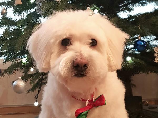 Joulu on tehty piparista, manteleista ja jouluperinteistä