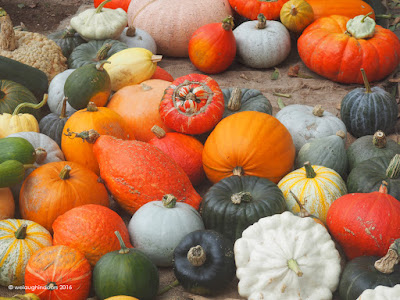 Collection of Pumpkins, Squashes and Gourds Heligan Autumn