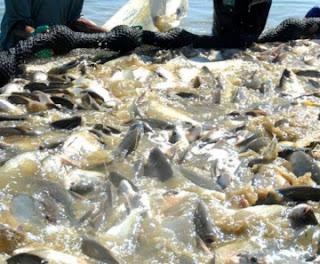 Brasil volta a exportar pescado para Israel