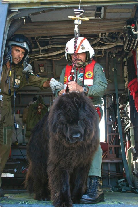 Part P Certificate >> Meet The Karazans: Real Newfoundland Water Rescue Work In Italy, Part Two