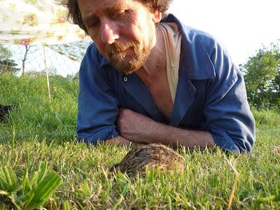 Organic free-range quail