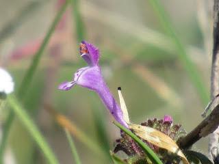 shasta county california wildflowers