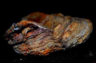 Austern, oesters, oysters, ostrak, Oysters, Стридите, østers, Austrid, osterit, huîtres, ostrur, ostriche, ostres,kamenice, austeres, Austrės, ostrygi, ostras,