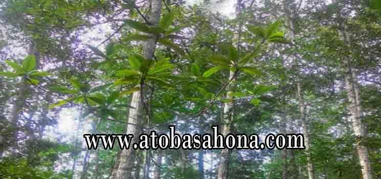 Pembagian Zonasi Hutan Mangrove