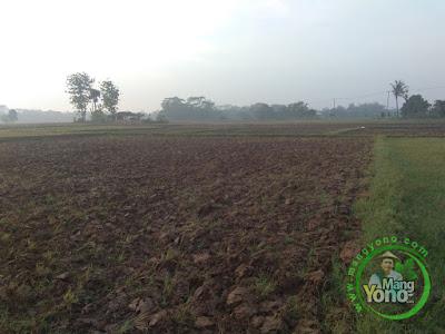 Ini sawah yang akan ditanami padi NAZWA di Tegalsungsang Blok Timur