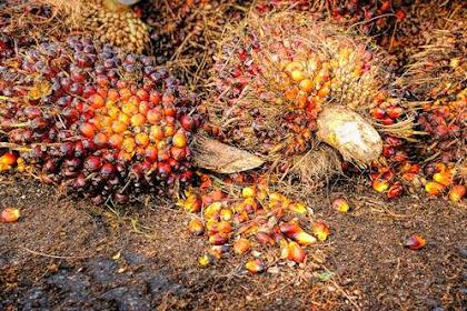 Lowongan Perusahaan Distributor Spare Part Industri Kelapa Sawit Di Pekanbaru Oktober 2018