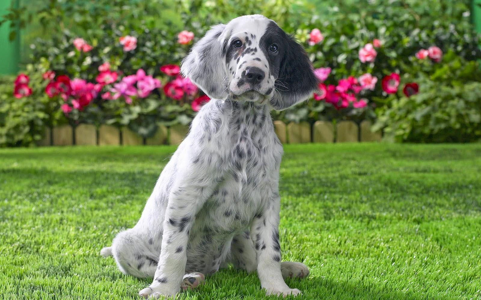 Zwart witte hond in de tuin