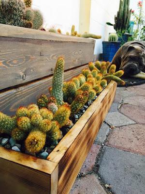 cactus, succulents, garden planters, succulent planters, Miami succulents, gardening, nature, plants, Miami, Miami garden business, garden design, custom wood garden planters