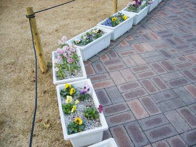 パンジーはじめ冬にも元気に咲く花たち