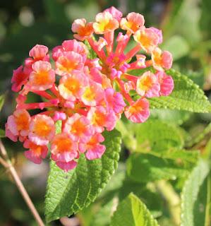10 Bunga Terindah di Dunia