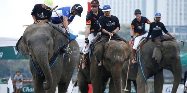 إلغاء لعبة بولو الأفيال في تايلاند