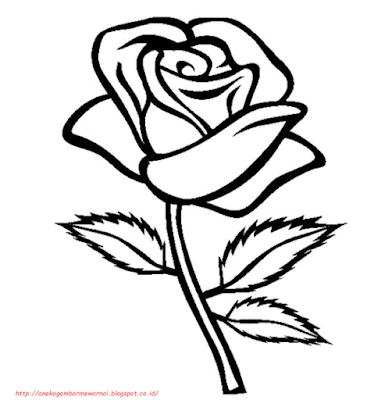 gambar bunga mawar - 15