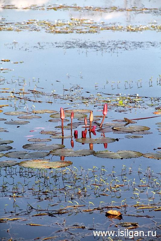 водохранилище Барай ( Барай Preah Khan или Jayatataka)