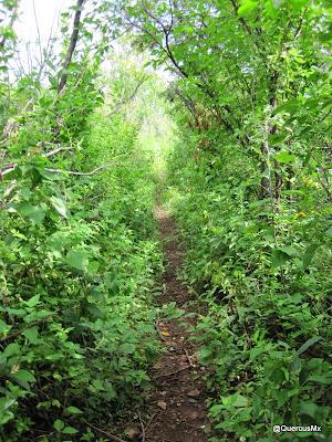 Vereda en el bosque subcaducifolio en el Cerro García