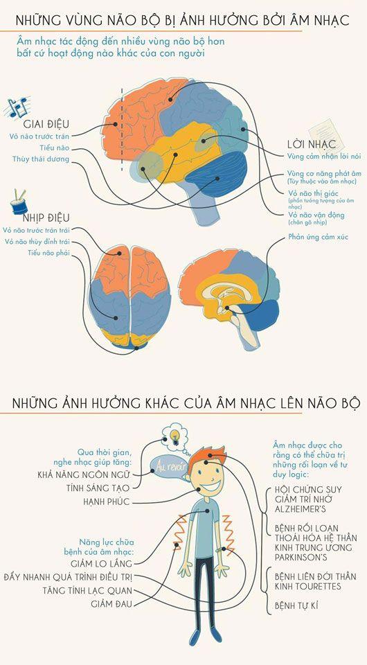 Âm nhạc và não bộ - âm nhạc tác động đến nhiều vùng não bộ hơn bất cứ hoạt động nào khác của con người.