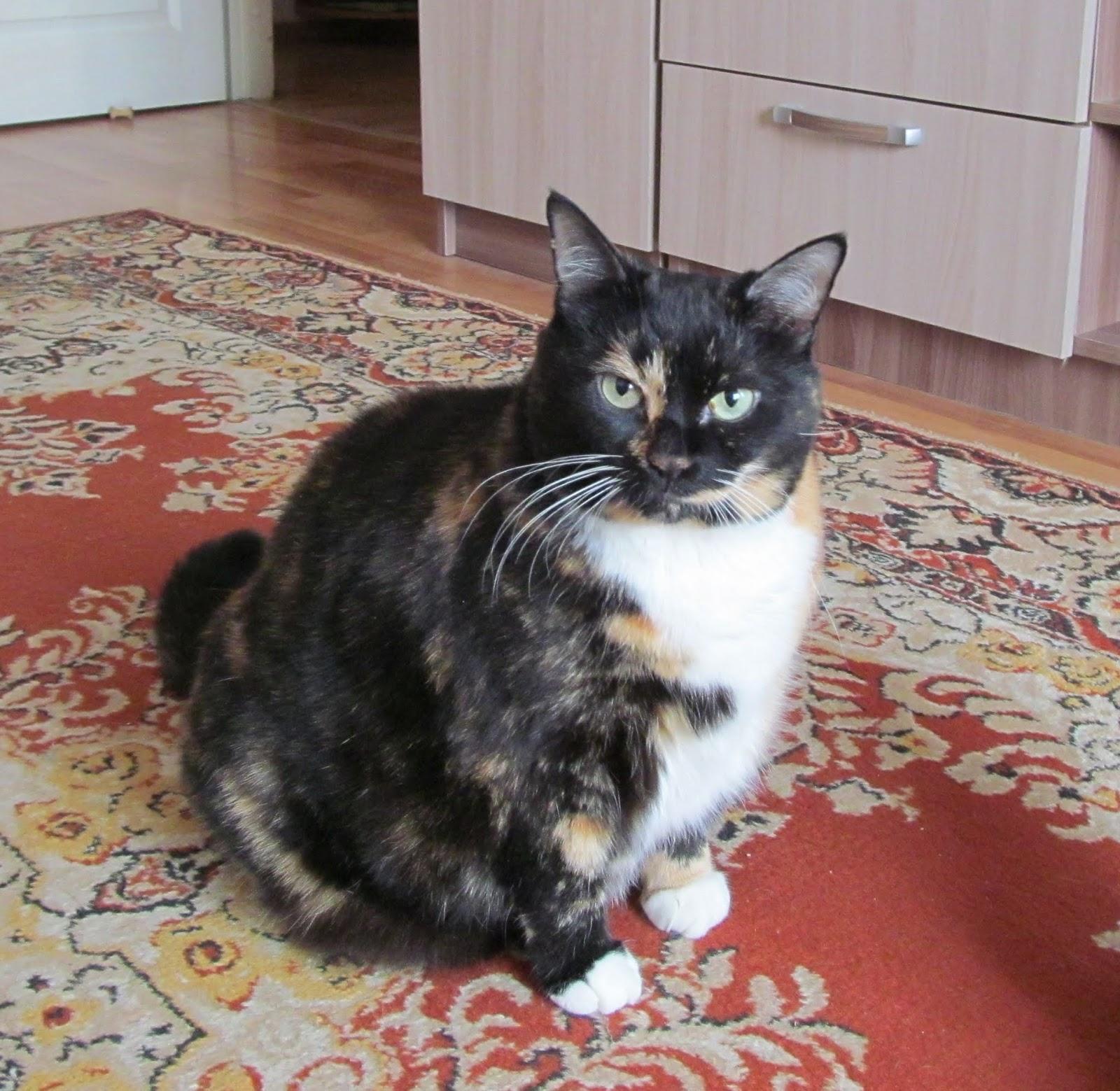 Как сбросить вес кошек