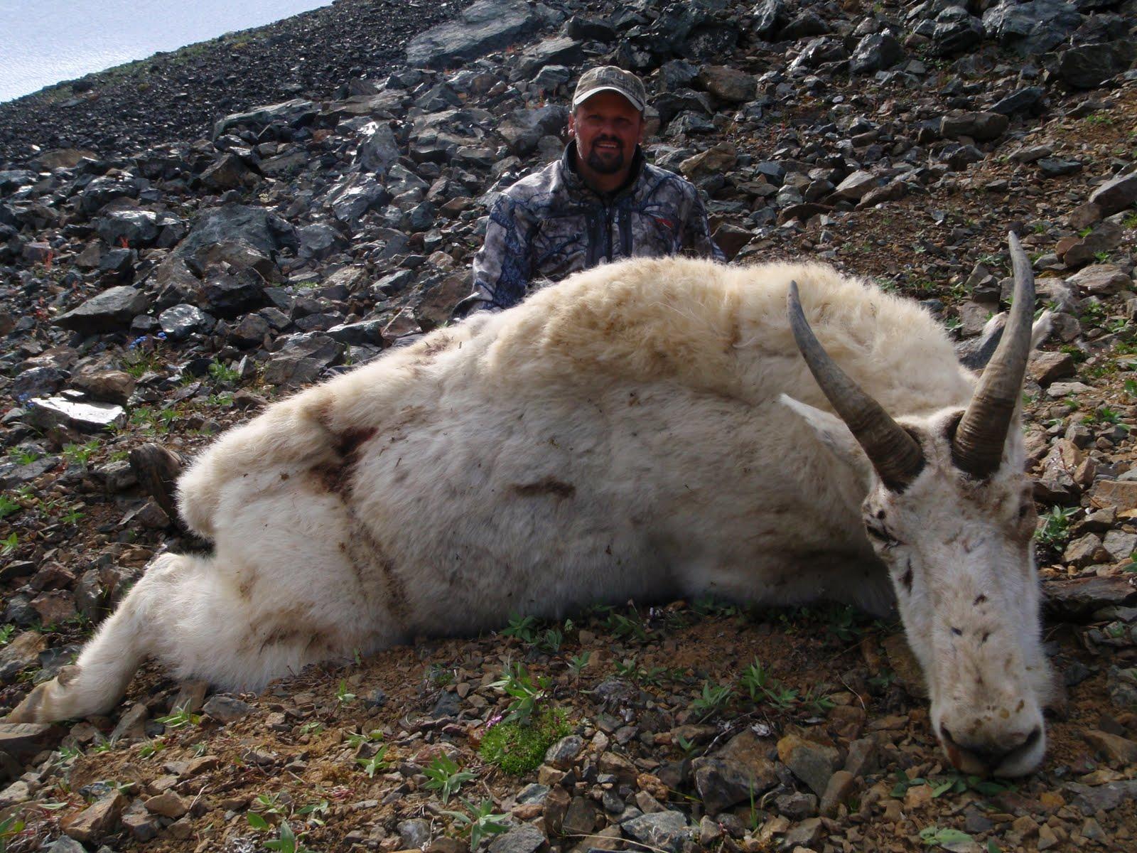 World record mountain goat