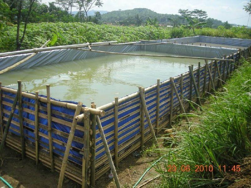 konstruksi kolam lele tembok