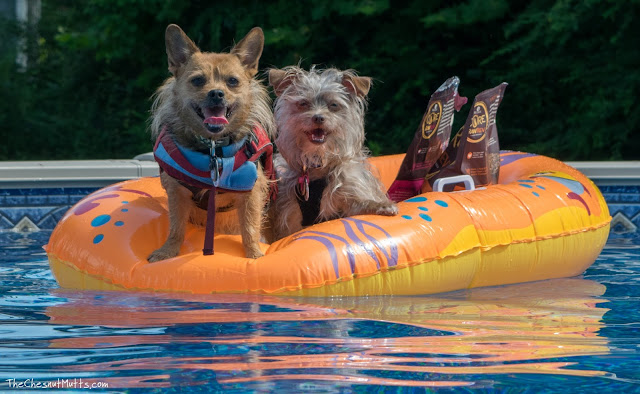 Jada and Bailey sailing on their boat
