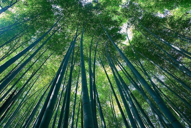 صور اجمل واكبر عشر غابات في العالم