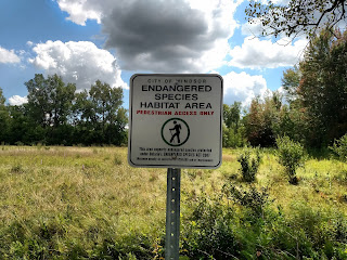endangered plants Ojibway prairie restoration windsor ontario ecological