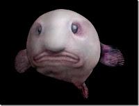 Blobfish инопланетяне на земле фото