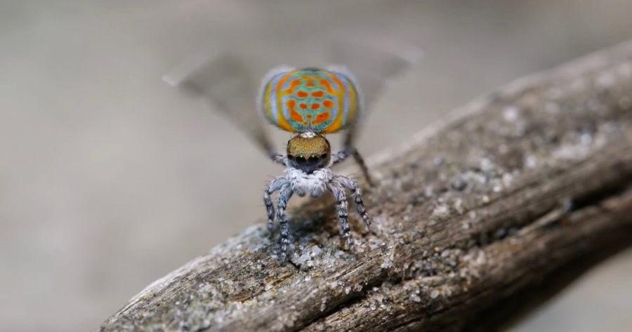 Un pequeño pero poderoso (y danzarín) ejemplo de diseño: la araña ...