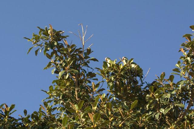 papugi na Costa del Sol, gdzie zobaczyć?