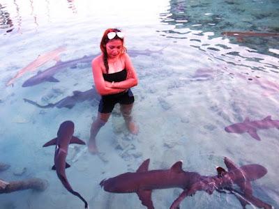 Wisata Nyali Ke Penangkaran Hiu, Karimun Jawa