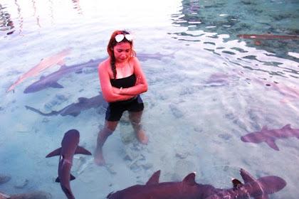 Wisata Minat Khusus ke Penangkaran Hiu, Karimun Jawa