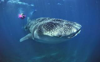 https://bio-orbis.blogspot.com.br/2014/05/os-maiores-animais-do-planeta.html
