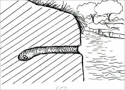Martín pescador grande Megaceryle torquata