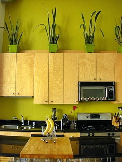 Tips For Decorating The Kitchen With Hanging Plants 4