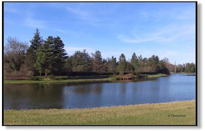 Seitenfluss im Wörlitzer Park