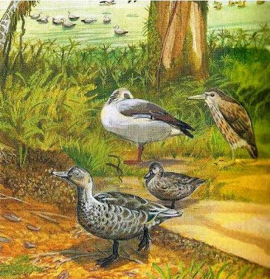 patos extintos Pato de Mauricio Anas theodori