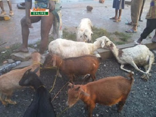 Mobs strips 30-year-old Man naked and tied him to an electric pole for stealing 15 goats