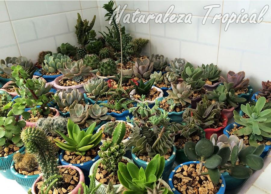 Consejos para evitar que mueran las plantas suculentas de tu colección si vas a viajar