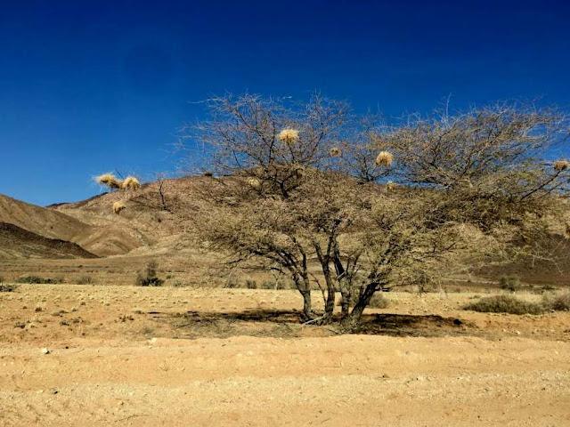 nidos de pájaros en namibia