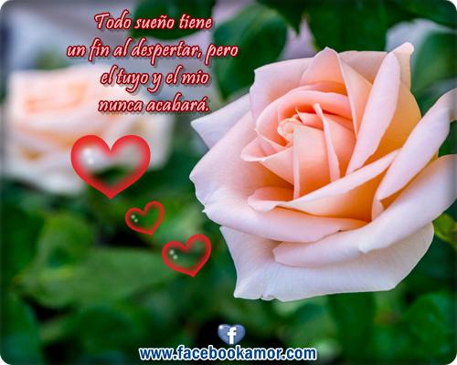 Imagenes Bonitas De Flores Con Frases: Imágenes Flores De Rosas Bonitas Con Frases Para