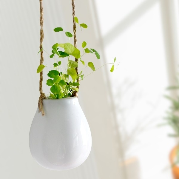 design squeezed daily plants hanging around hanging pots. Black Bedroom Furniture Sets. Home Design Ideas
