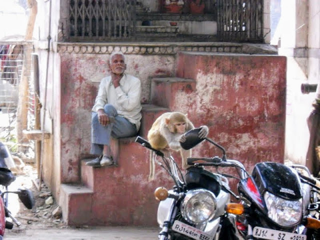 Monkey looking in the mirror of a motorcycle while a man looks on in Jaipur India
