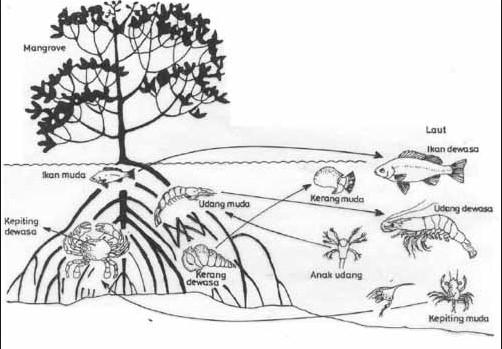 3 Contoh Jaring Jaring Makanan Pada Ekosistem Perairan Smansa Edu