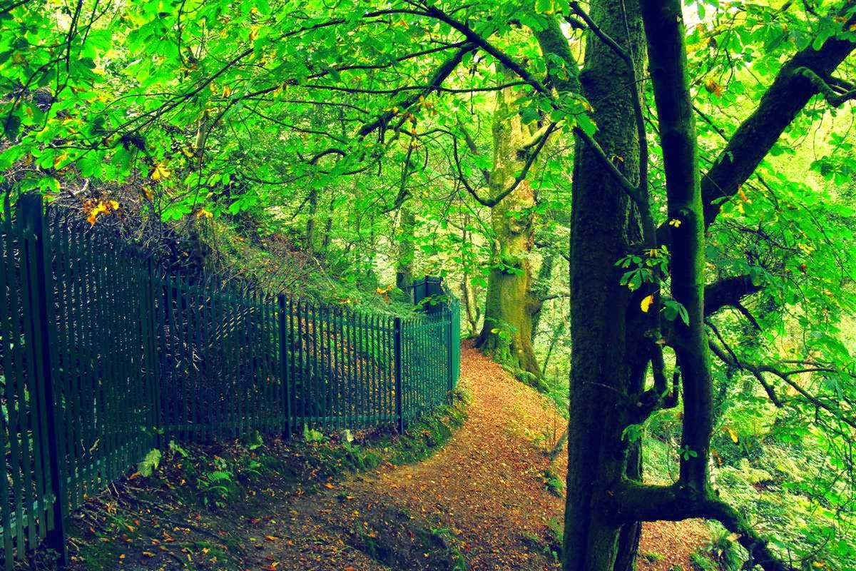 trees, iron fence, green light