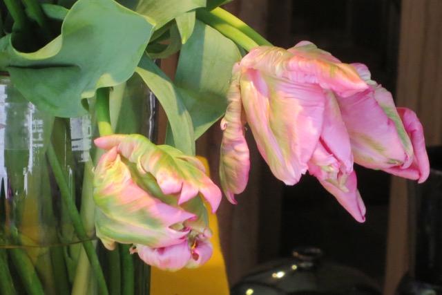 Freudenschauer Gib Mir Pink  Give Me Pink-3735