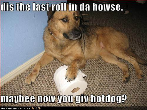 funny dog pictures with captions - photo #36